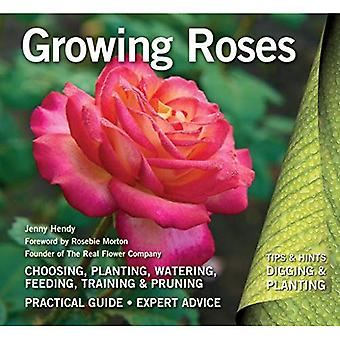 Growing Roses: Plan, Plant and Maintain (Digging and Planting)