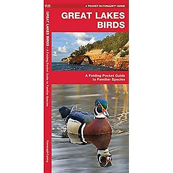 Great Lakes Birds: An Introduction to Familiar Species (Pocket Naturalist Guides)