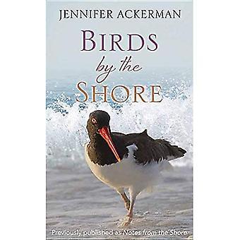 Ptáci u pobřeží: pozorování přirozeného života Atlantského pobřeží