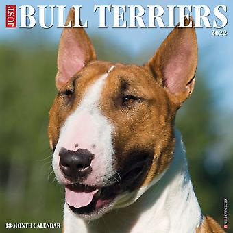 Just Bull Terriers 2022 Wall Calendar Dog Breed av Willow Creek Press