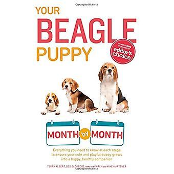 Your Beagle Puppy Month by Month - Everything You Need to Know at Each