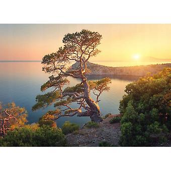 Wallpaper mural Tree Mountain Sunset