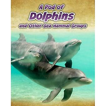 A Pod of Dolphins: and Other Sea Mammal Groups (Animals in Groups)