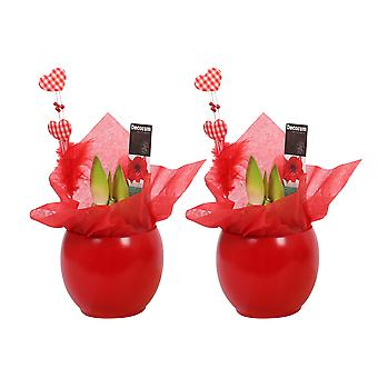 Choice of Green - Amaryllis - Hippeastrum - Belladonna Lily - 2 stems red - in ceramic pot Melanie - Set of 2 pieces