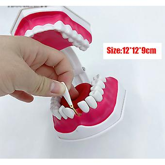 Adult Dental Teeth Model And Toothbrush With Removable High Grade Teeth Teaching Model (with Tongue)