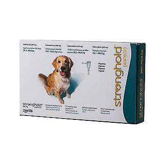 Stronghold turkis Dogs 20-40kg (44-88lbs)-3 Pack
