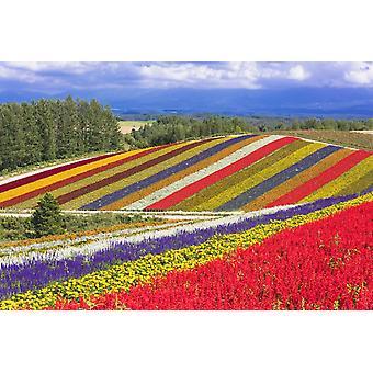 Tapetmaleri Landlig landskap i Biei Town Hill, Japan