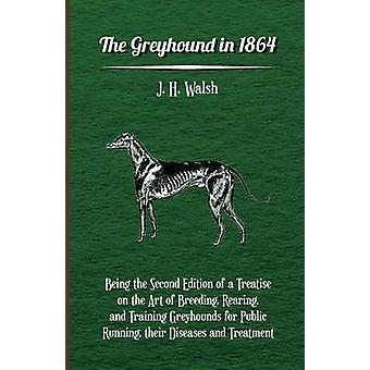 The Greyhound in 1864  Being the Second Edition of a Treatise on the Art of Breeding Rearing and Training Greyhounds for Public Running their Diseases and Treatment by Walsh & J. H.