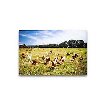 Kippen die op de Poster van het Gras -Beeld door Shutterstock weiden