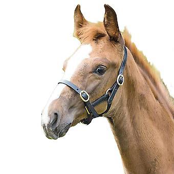 Blenheim Leather Adjustable Horse Headcollar