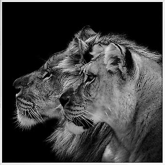 JUNIQE Print - Lion Duo Profile by Lothare Dambreville - Lion Poster in Grey & Black