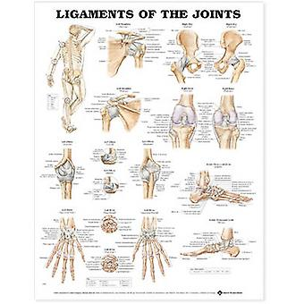 Ligaments of the Joints Anatomical Chart by Prepared for publication by Anatomical Chart Company