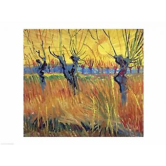 Pollarded Willows and Setting Sun 1888 Poster Print by Vincent Van Gogh